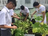 有機耕種收割及烹調農作物活動相片縮圖